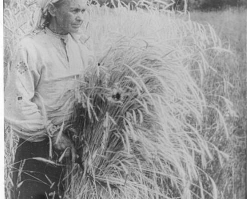 Старая колхозница Купцова М.Я. Кз Красный победитель. Мошковский район. 1943г.