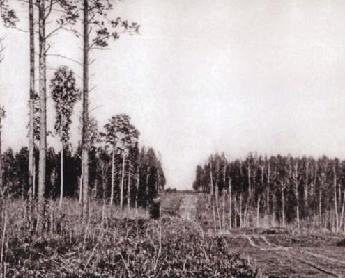 Просека в сосновом бору на месте Николаевского (Красного) проспекта. 1896