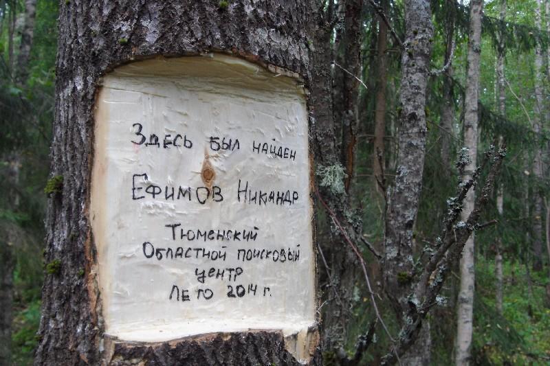 Зарубка на дереве, под которым обнаружены останки Ефимова