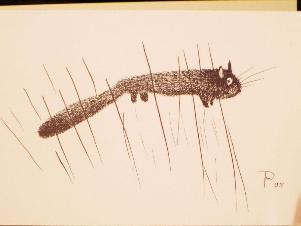 кошкин хвост (4)