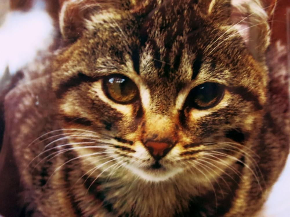 кошкин хвост (5)
